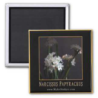 Narcissus papyraceus (Paperwhites) Magnet Refrigerator Magnets