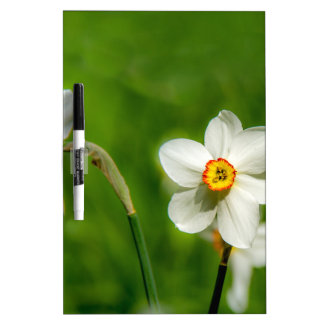 Narcissus Plant Dry-Erase Boards
