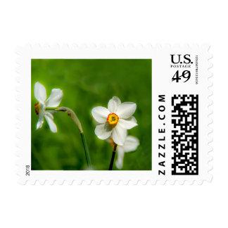 Narcissus Postage Stamp