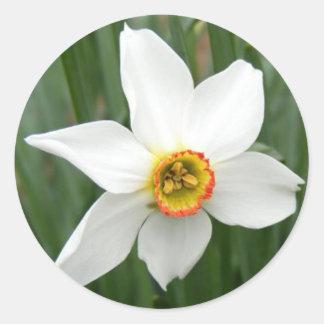 Narcissus Round Stickers
