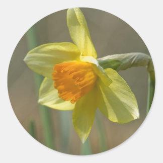 Narcissus Classic Round Sticker