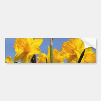 Narcissuses Car Bumper Sticker