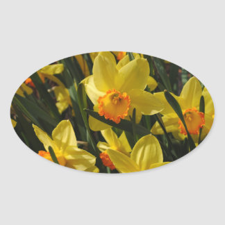 Narcissuses Oval Sticker