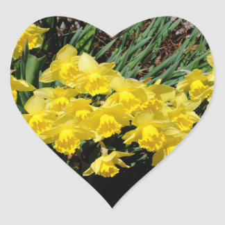 Narcissuses Heart Sticker