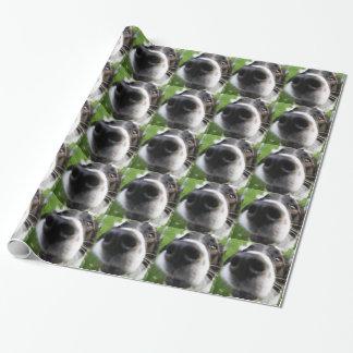 Nariz de perro del border collie papel de regalo