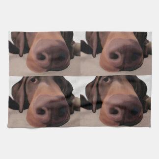 Nariz de perro del paño de la cocina toalla