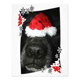 Nariz de perro negra del laboratorio con la fotogr comunicado personalizado
