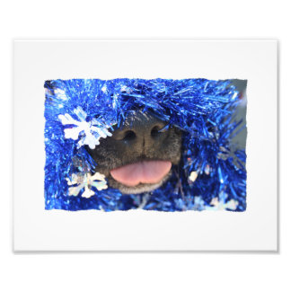 Nariz de perro negro con la lengua azul de la mall fotografia