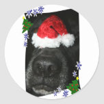 Nariz de perro que lleva el gorra de Santa, mezcla Pegatina Redonda