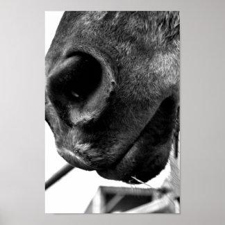 Nariz del caballo póster