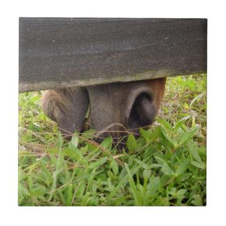 Nariz del caballo que pasta debajo de la cerca azulejo cuadrado pequeño