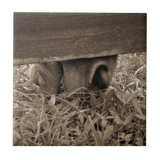 Nariz del caballo que pasta debajo de la cerca ent azulejos ceramicos