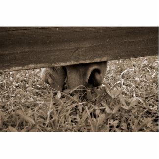 Nariz del caballo que pasta debajo de la cerca ent escultura fotografica
