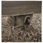 Nariz del caballo que pasta debajo de la cerca ent servilleta de papel