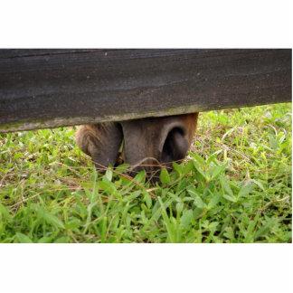 Nariz del caballo que pasta debajo de la cerca escultura fotografica