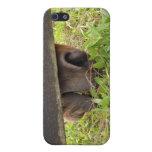 Nariz del caballo que pasta debajo de la cerca iPhone 5 coberturas