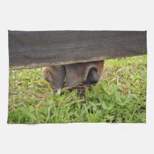 Nariz del caballo que pasta debajo de la cerca toalla de cocina