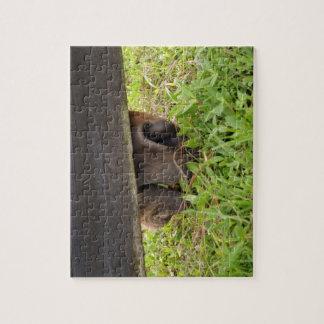 Nariz del caballo que pasta debajo de la cerca rompecabeza con fotos
