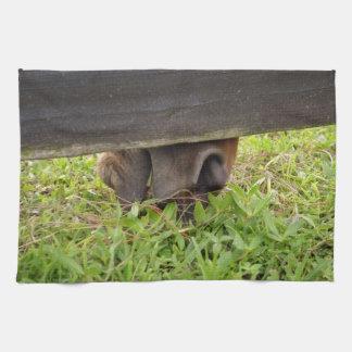 Nariz del caballo que pasta debajo de la cerca toallas