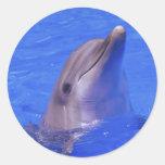 Nariz del delfín etiquetas redondas