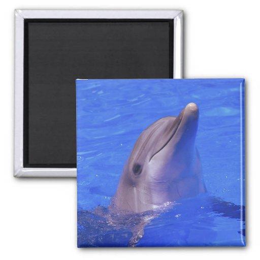 Nariz del delfín iman para frigorífico