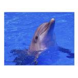 Nariz del delfín postal