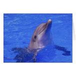 Nariz del delfín tarjeta
