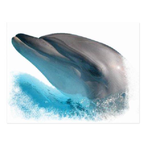 Nariz del delfín tarjeta postal