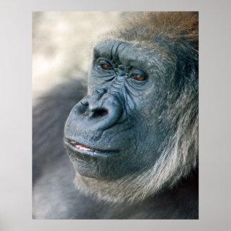 Nariz del gorila de la tierra baja posters