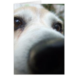 Nariz divertida del beagle tarjeta de felicitación