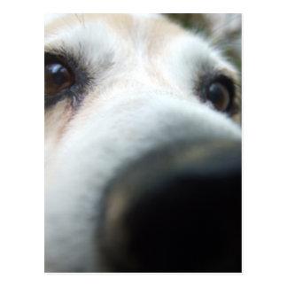 Nariz divertida del beagle postal