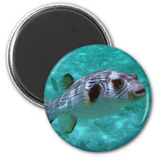 Narrow-lined Puffer Fish 2 Inch Round Magnet