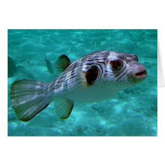 Narrow-lined Puffer Fish Card