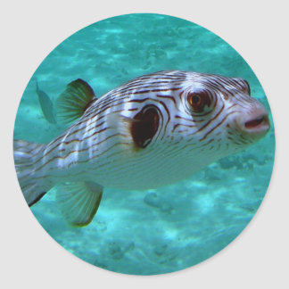 Narrow-lined Puffer Fish Classic Round Sticker