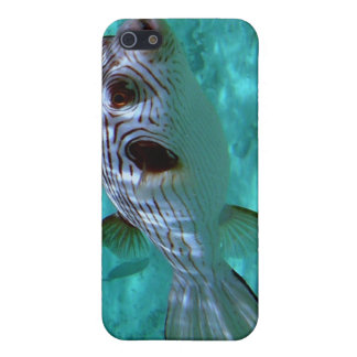 Narrow-lined Puffer Fish iPhone 5 Cover