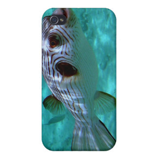 Narrow-lined Puffer Fish iPhone 4 Case