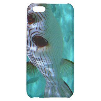 Narrow-lined Puffer Fish iPhone 5C Cover