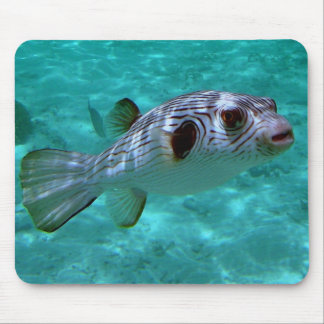 Narrow-lined Puffer Fish Mouse Pad