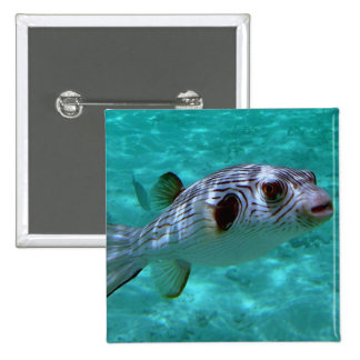 Narrow-lined Puffer Fish Pinback Button