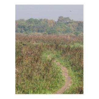 Narrow path through tall grass post cards
