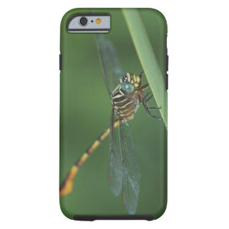 Narrow-striped Forceptail, Aphylla protracta, Tough iPhone 6 Case