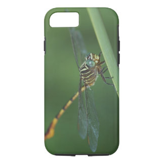 Narrow-striped Forceptail, Aphylla protracta, iPhone 8/7 Case
