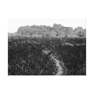 Narrow walking path through a nature park canvas print