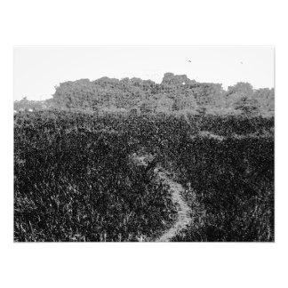 Narrow walking path through a nature park photo print