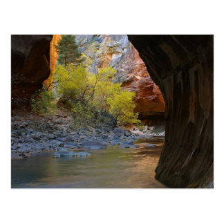 Narrows In Zion National Park Post Card