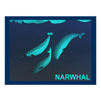 Narwhal Póster