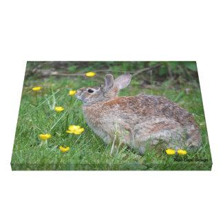 Nashua Bunny Canvas Print