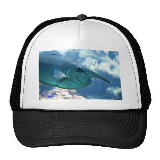 Naso brevirostris hat
