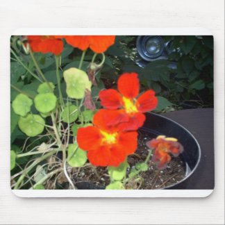 "Nasturniums and 1964 Dodge 330 ""EarthDayContest200 Mouse Pad"