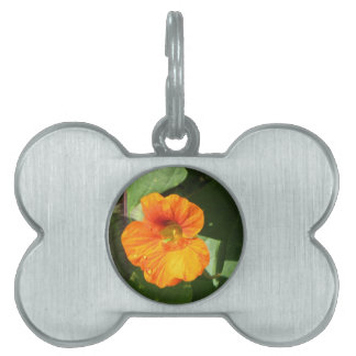 Nasturtium Blossom Pet Tags